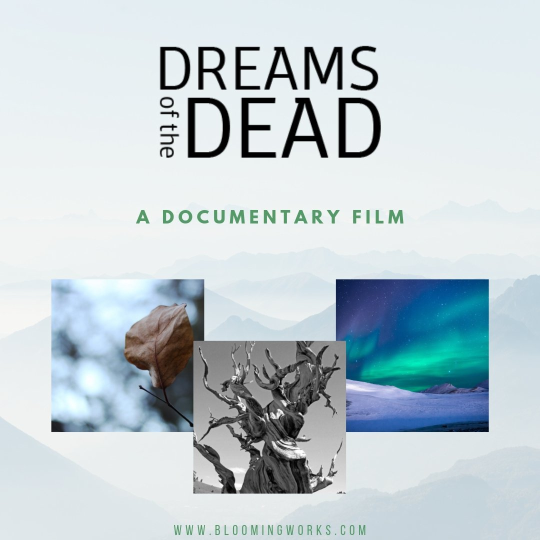 Film and Movie Website Design - Dreams of the Dead